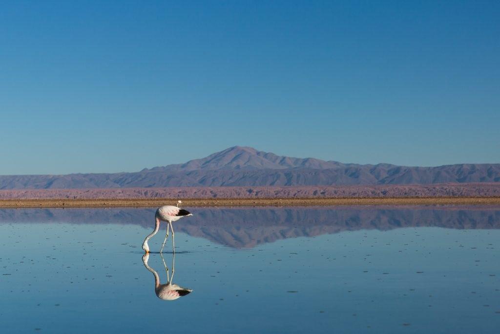 flamenco reflejo paisaje