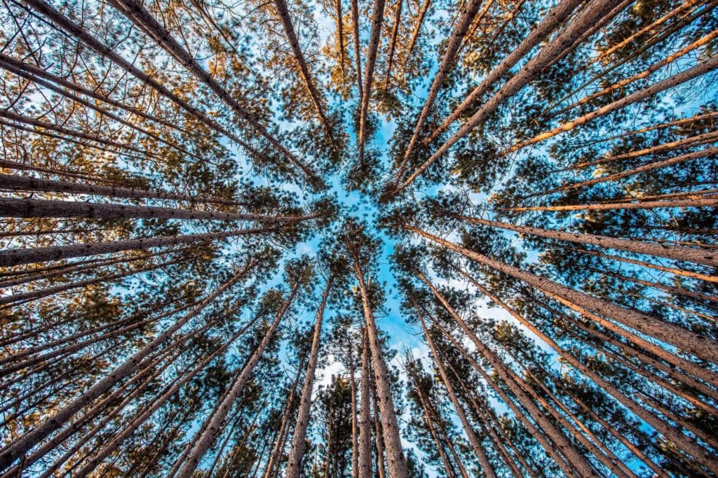 paisaje bosque