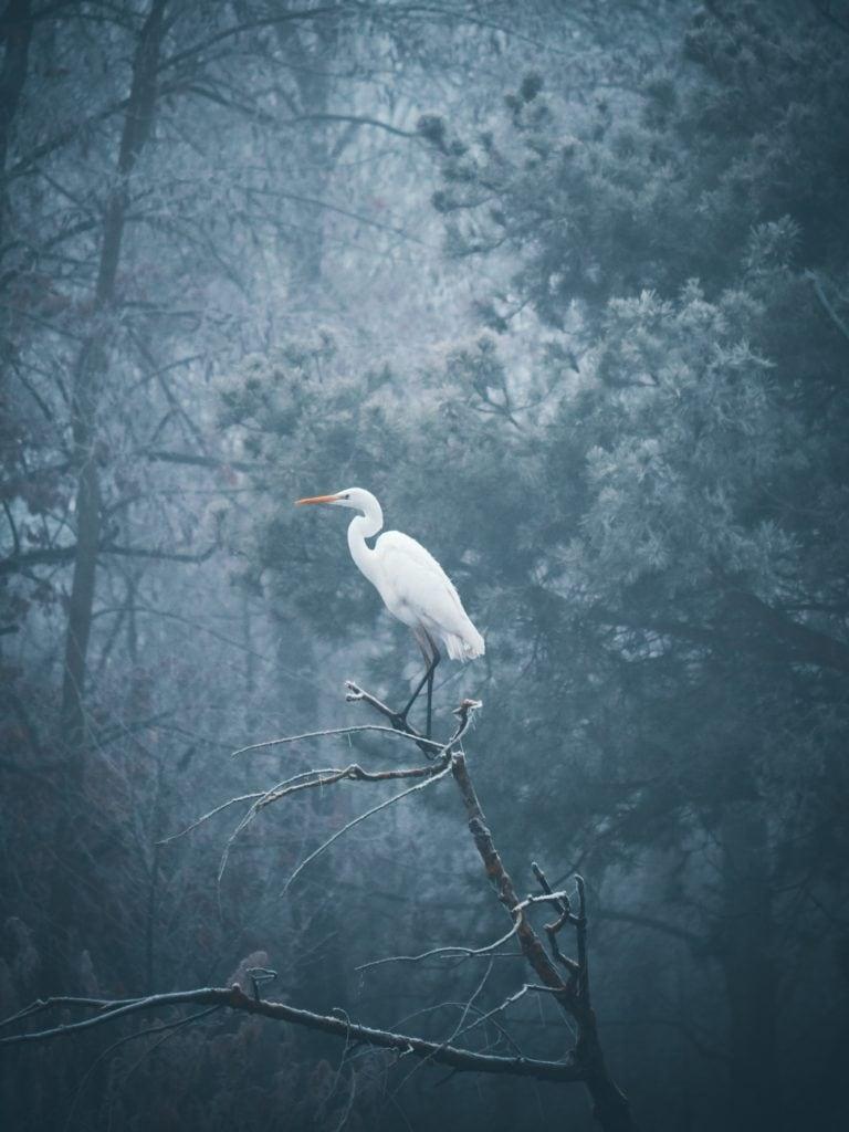 pájaro paisaje