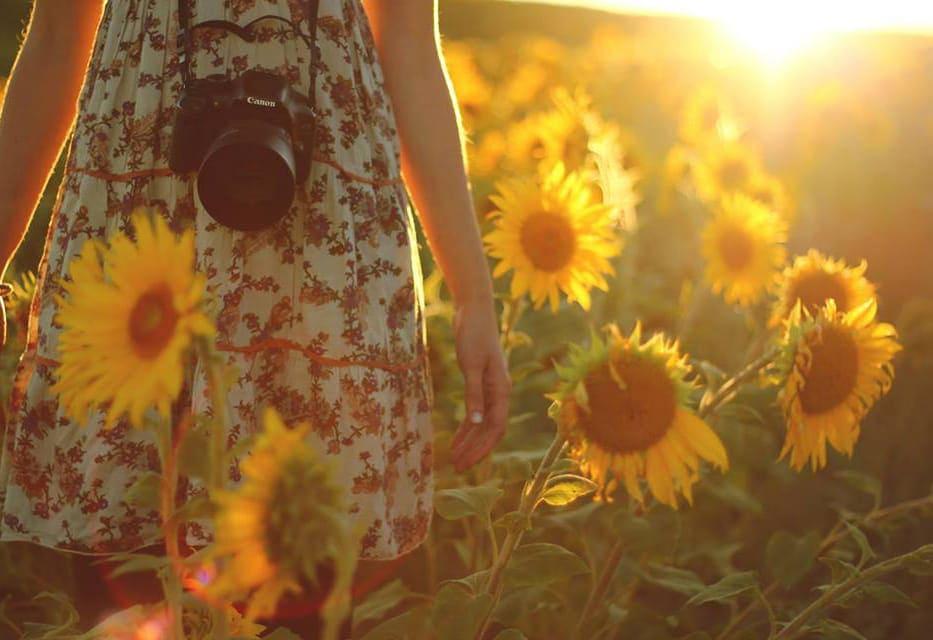 Chica con cámara en campo de girasoles a contraluz
