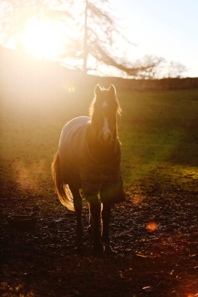 Foto de caballo con flares y halos