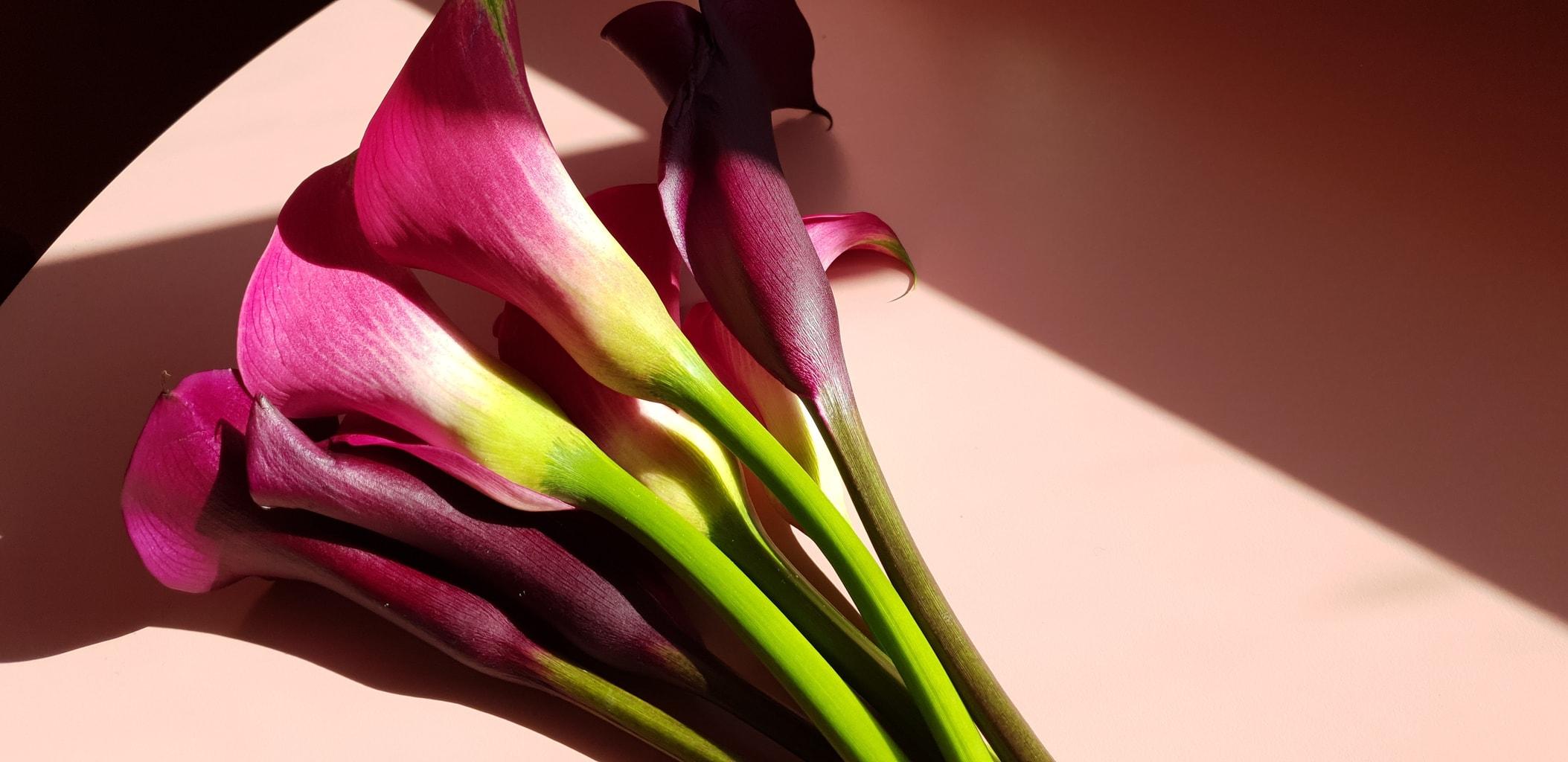 Flores capturadas con un Samsung Galaxy S9
