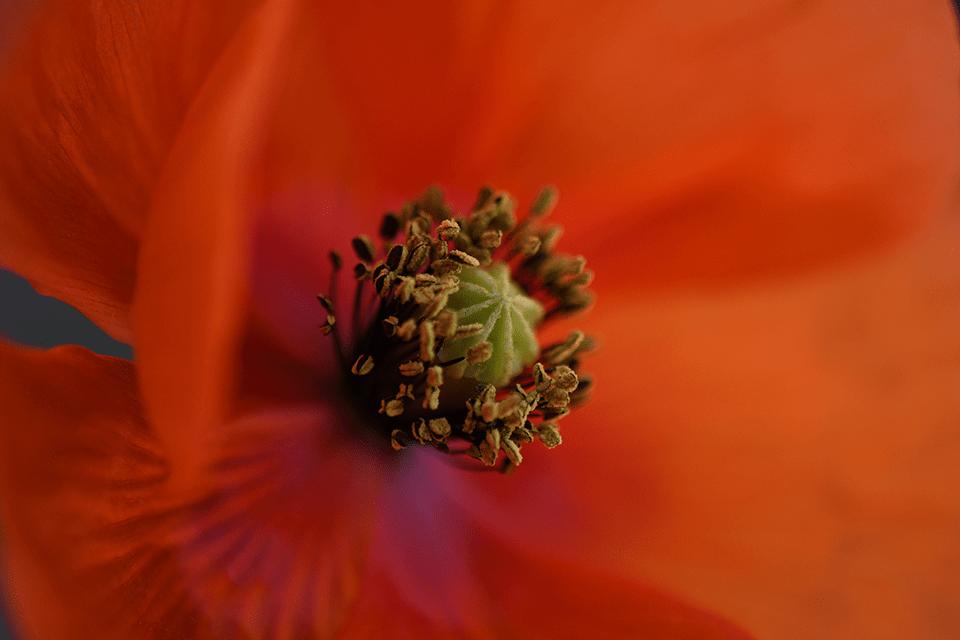 nikon d7500 macro flor