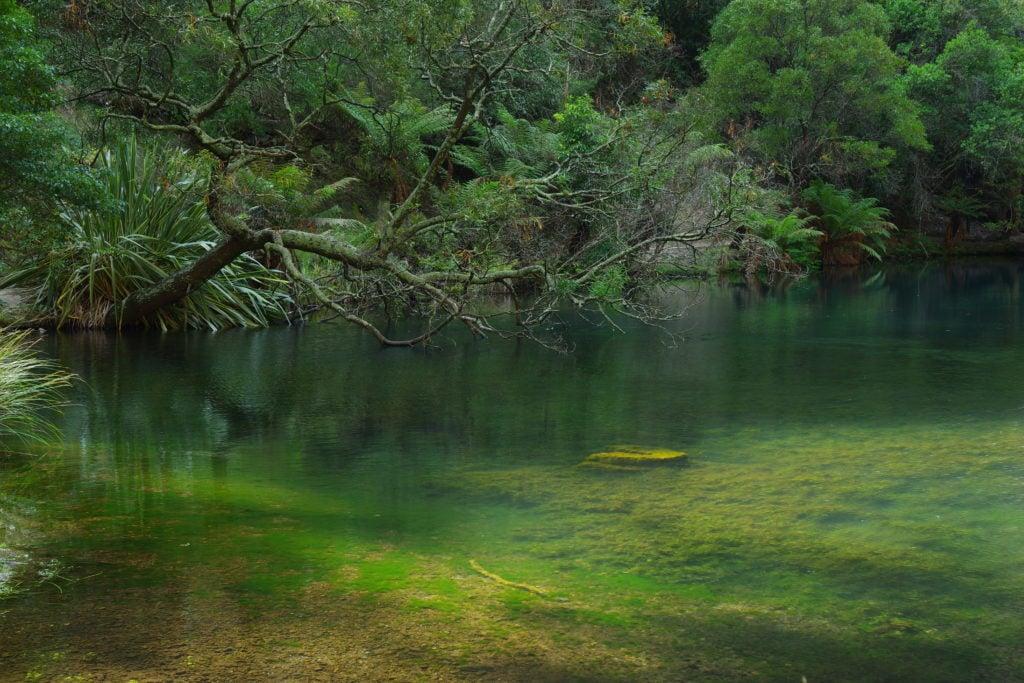 Lago con vegeteación