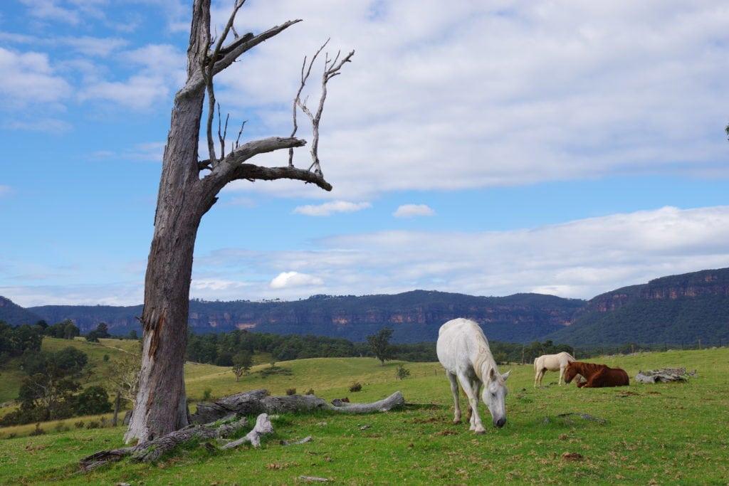 paisaje con caballos