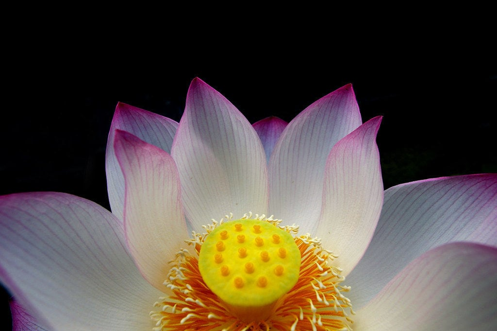 flor macro 100mm pentax objetivo