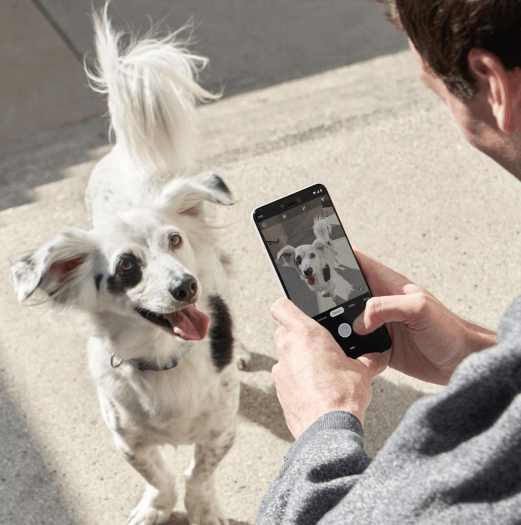 foto perro pixel 3xl