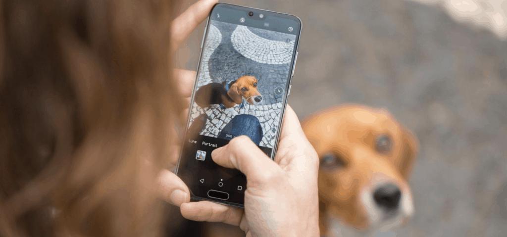 huawei foto perro