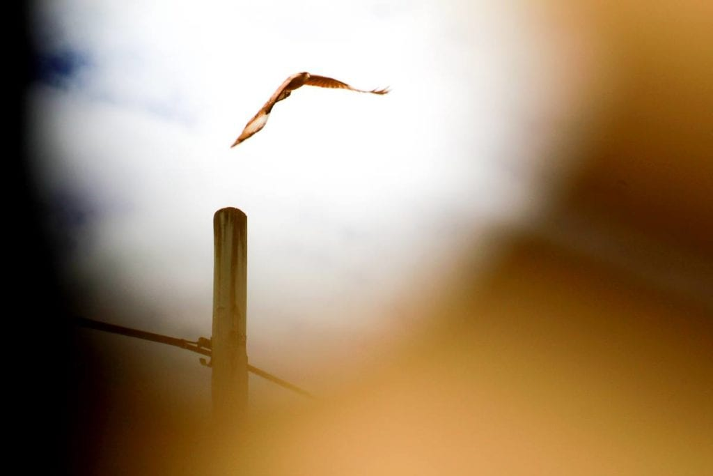 Pájaro visto a través de gafas