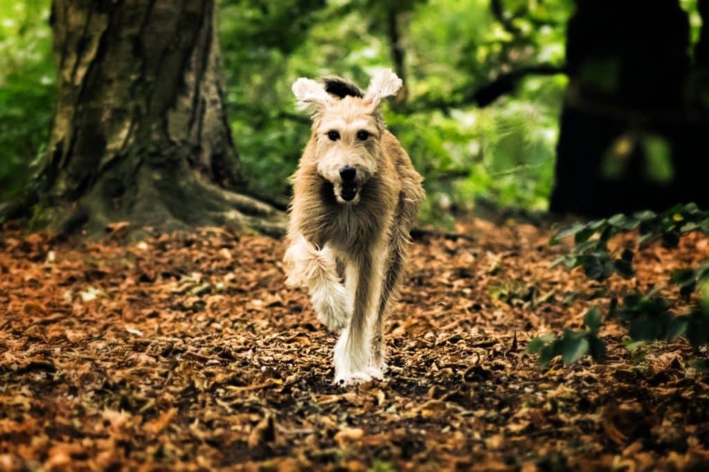 perro corriendo en perspectiva baja
