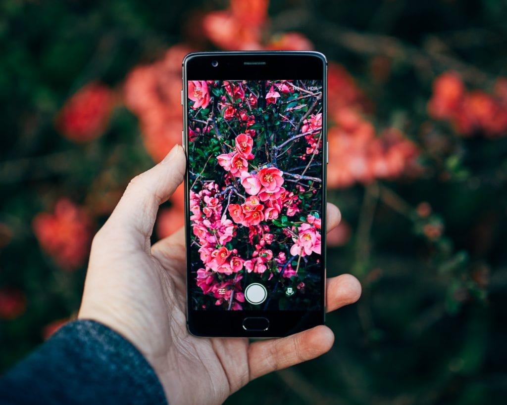 smartphone flores