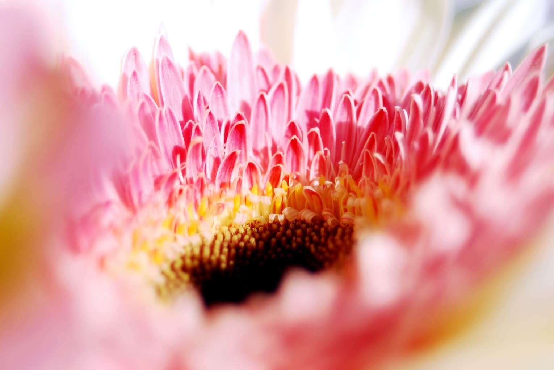 Fotografía macro de flor