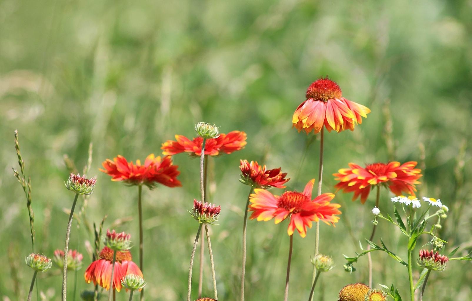 Foto de flores realizada con un teleobjetivo