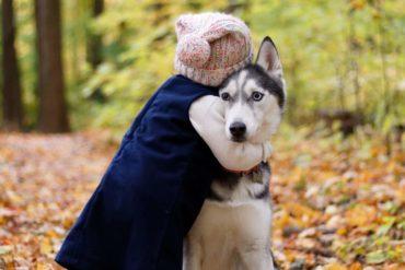 Niña abrazando a un perro en el bosque