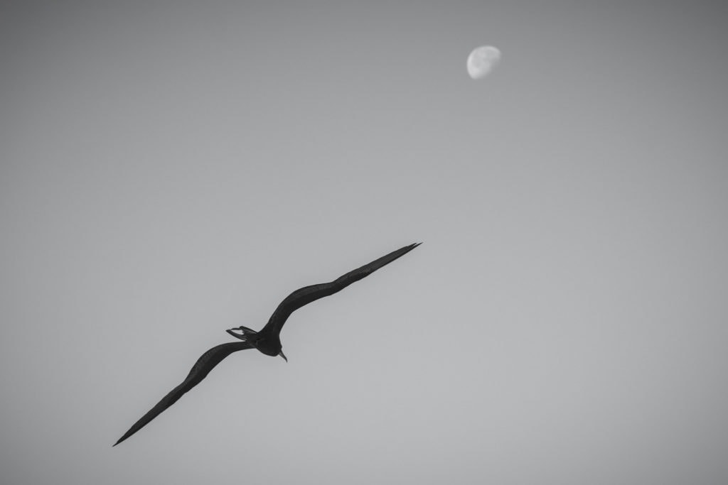Pájaro volando con luna al fondo