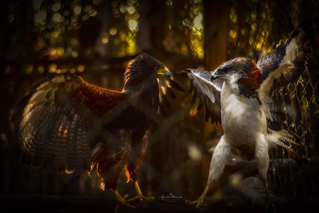 Aves en conflicto
