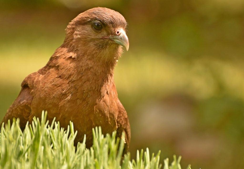 Pájaro en primer plano con desenfoque