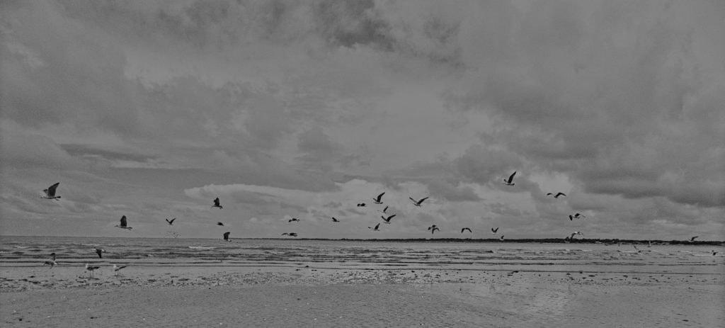 Aves volando en la playa
