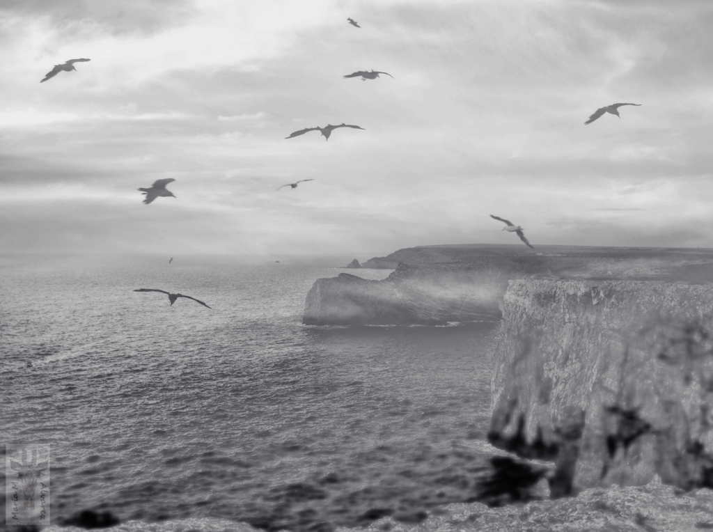 pájaros volando sobre acantilado