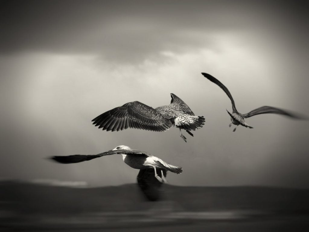 Pájaros volando en blanco y negro