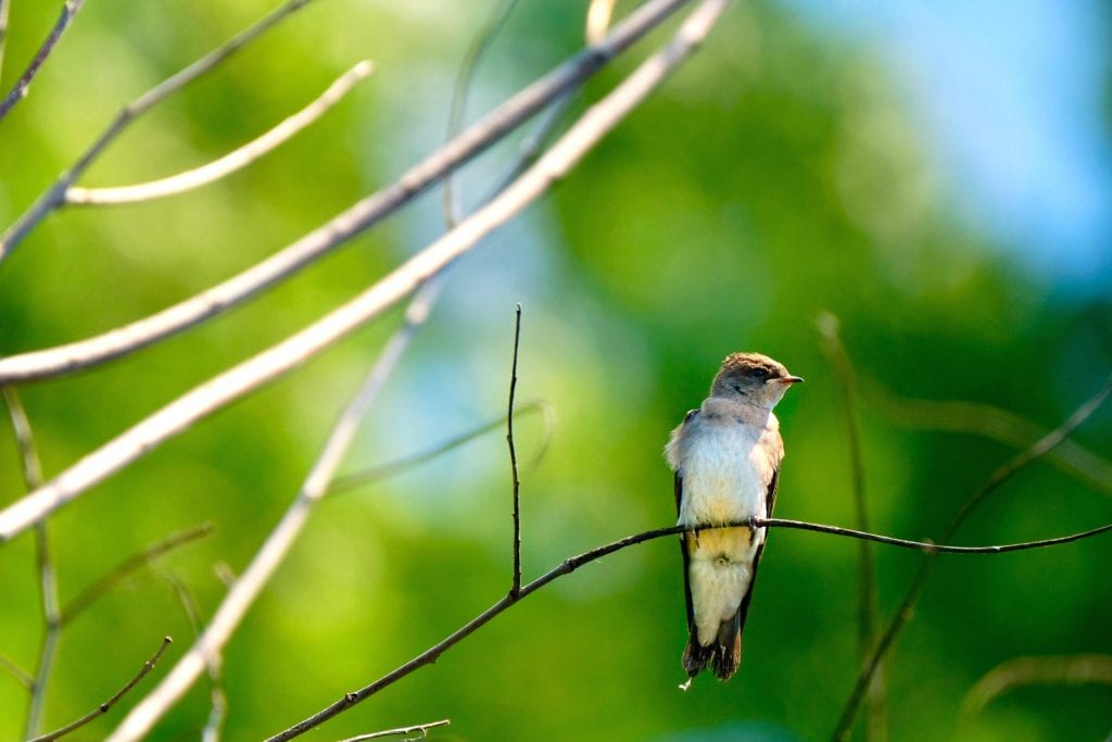 Pájaro fotografiado con X-t2