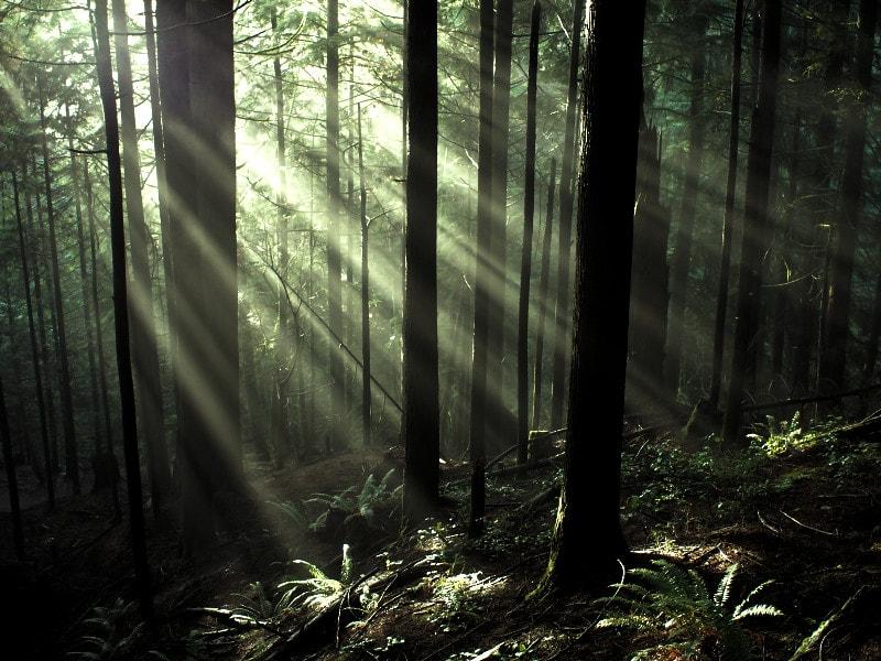 micro 4/3 bosque