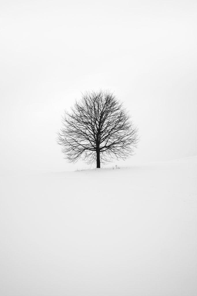 Árbol en medio de la imagen rodeado de nieve