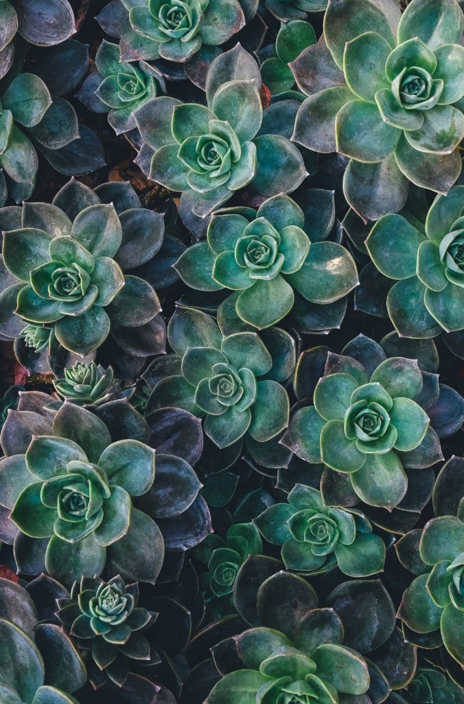 Planta con patrones repetidos