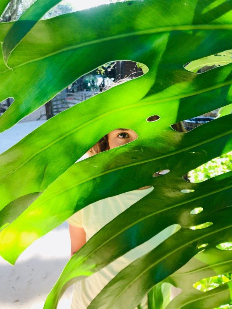 hojas móvil