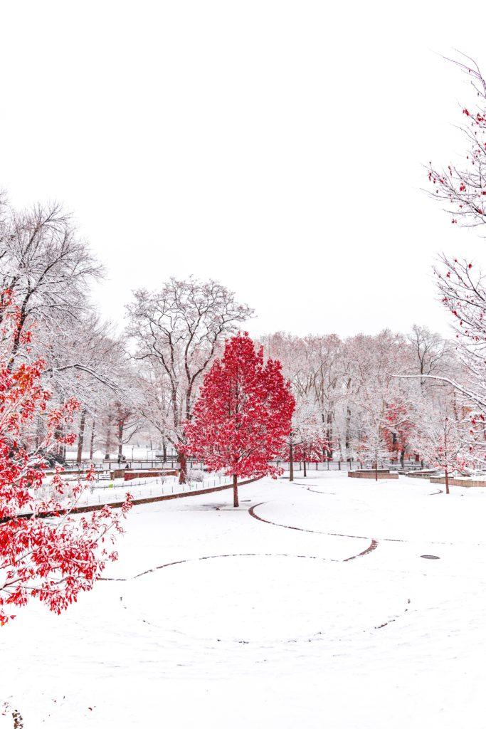 contraste color árbol