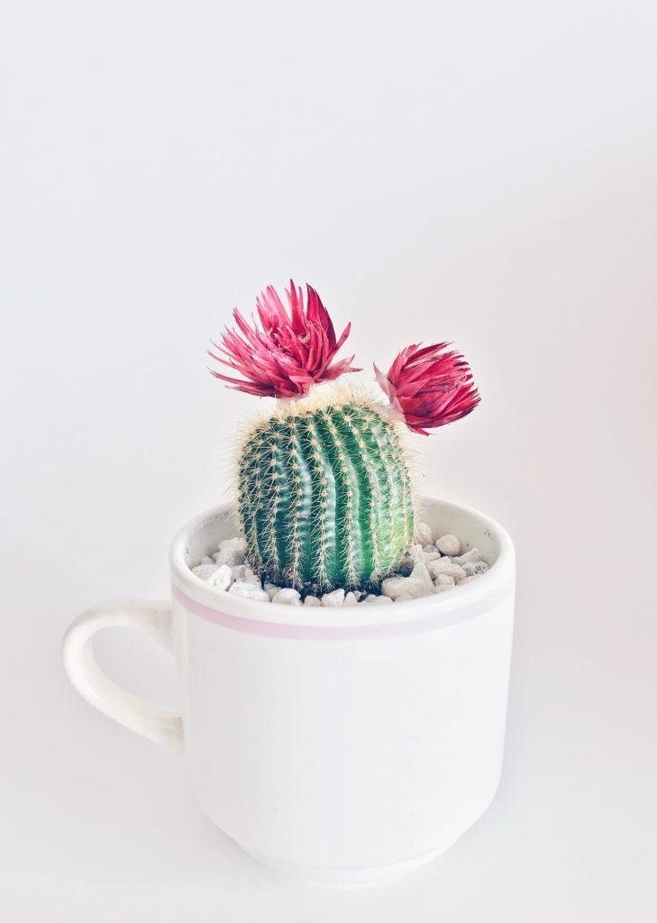 cactus minimalista