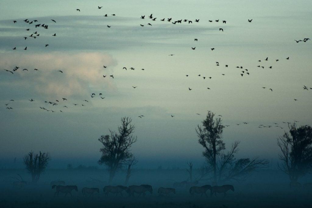 Paisaje con niebla y pájaros en el cielo