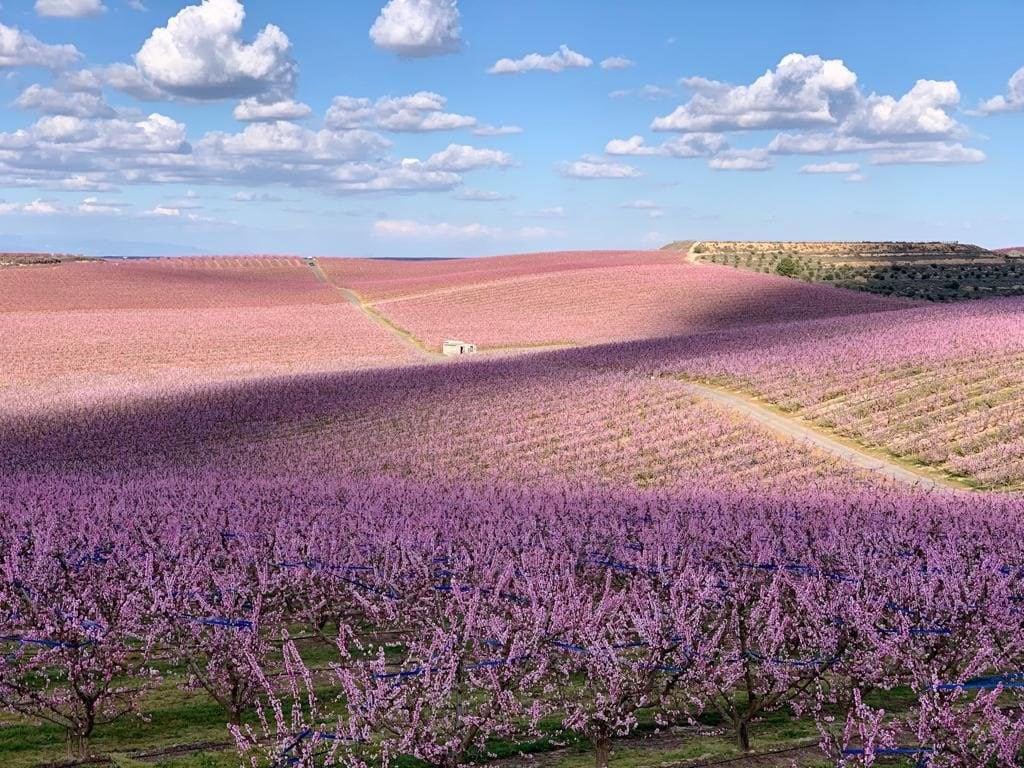 campo flores móvil