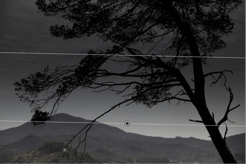 Filtro de Lightroom aplicado a foto de árbol
