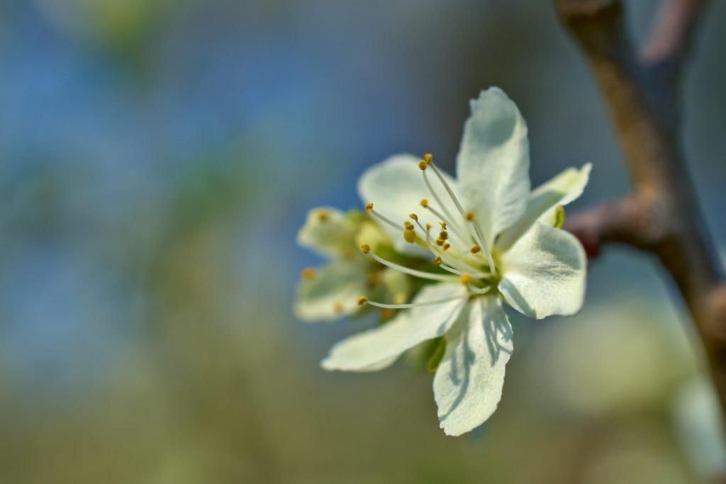 flor a6500