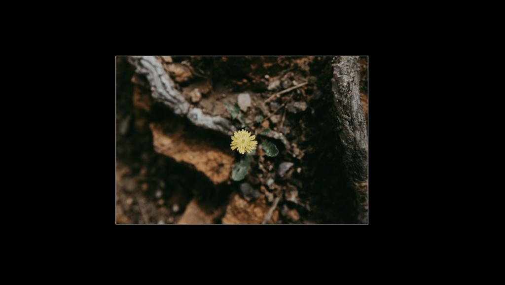 Flor en edición en lightroom