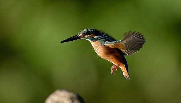 colibrí nikon d610