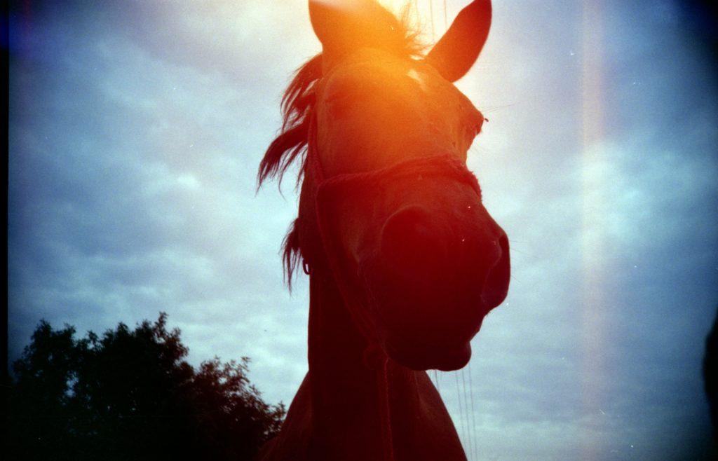 caballo lomografía