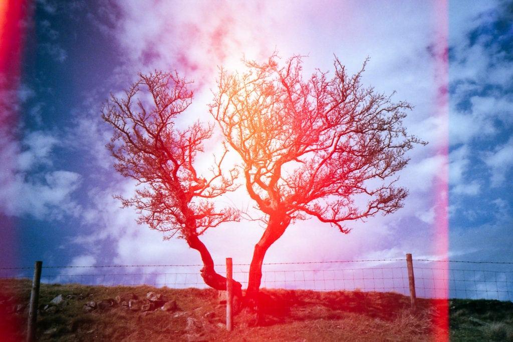 árbol lomografía