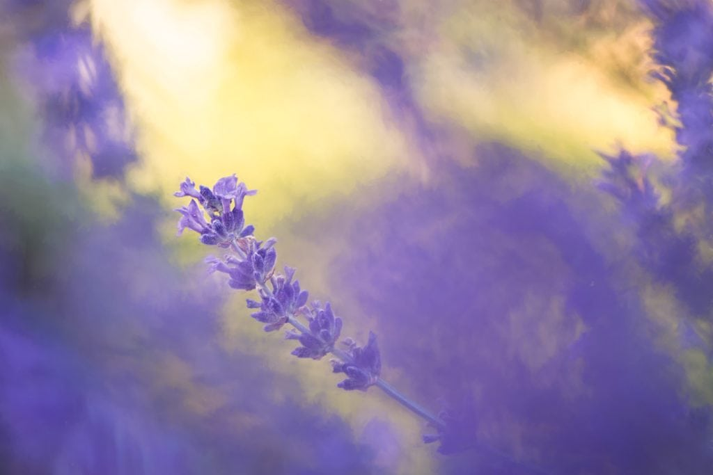 Flor violeta con fondo amarillo