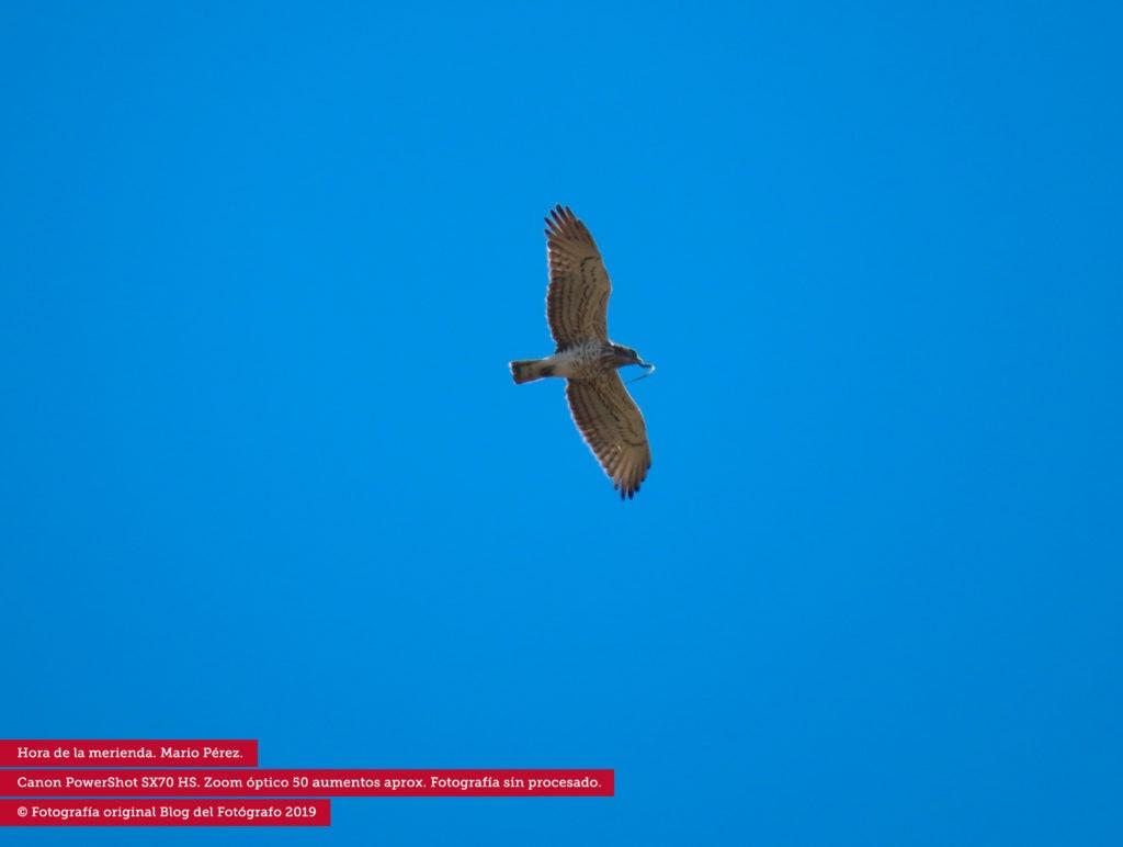 Ave volando fotografiada con el zoom de la Canon Powershot SX70