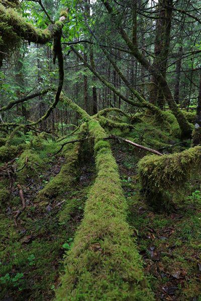Paisaje de bosque muy verde