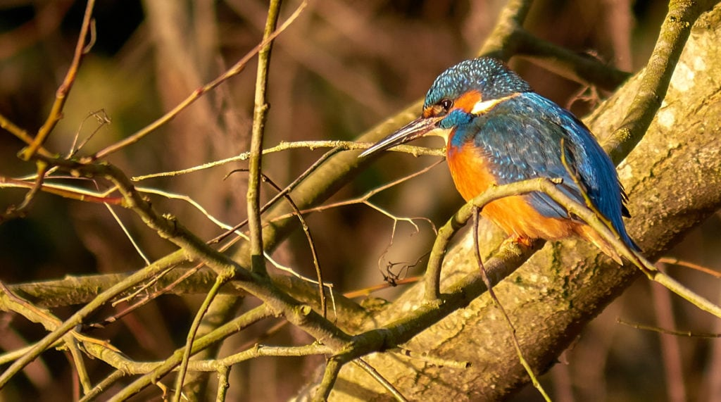 lumix g 80m pájaro
