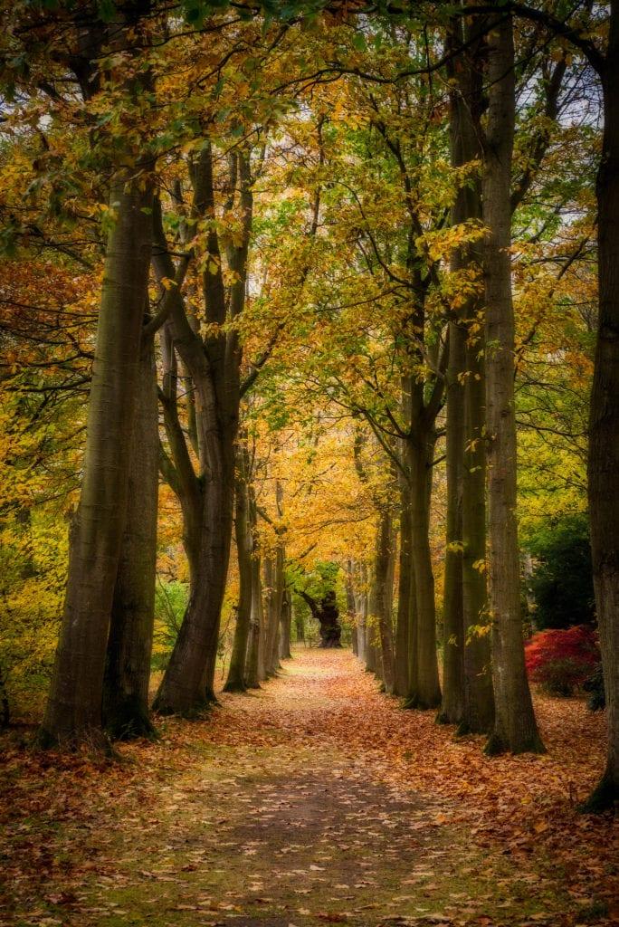 bosque efecto orton