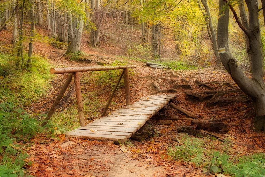 paisaje puente orton