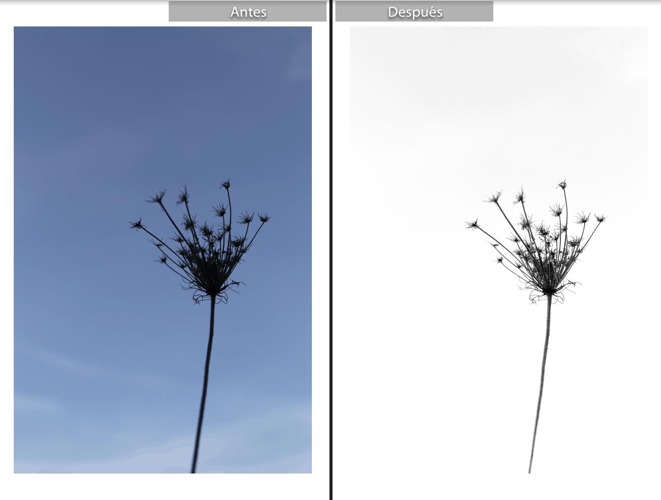 Flor en formato RAW y su comparativa editada