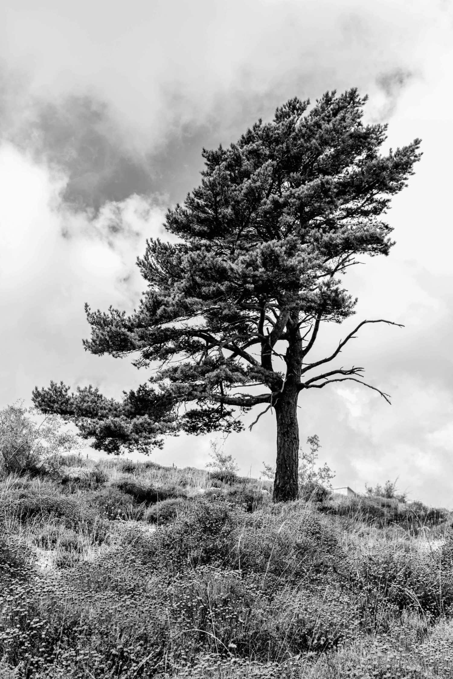 árbol monocromo con 24mm