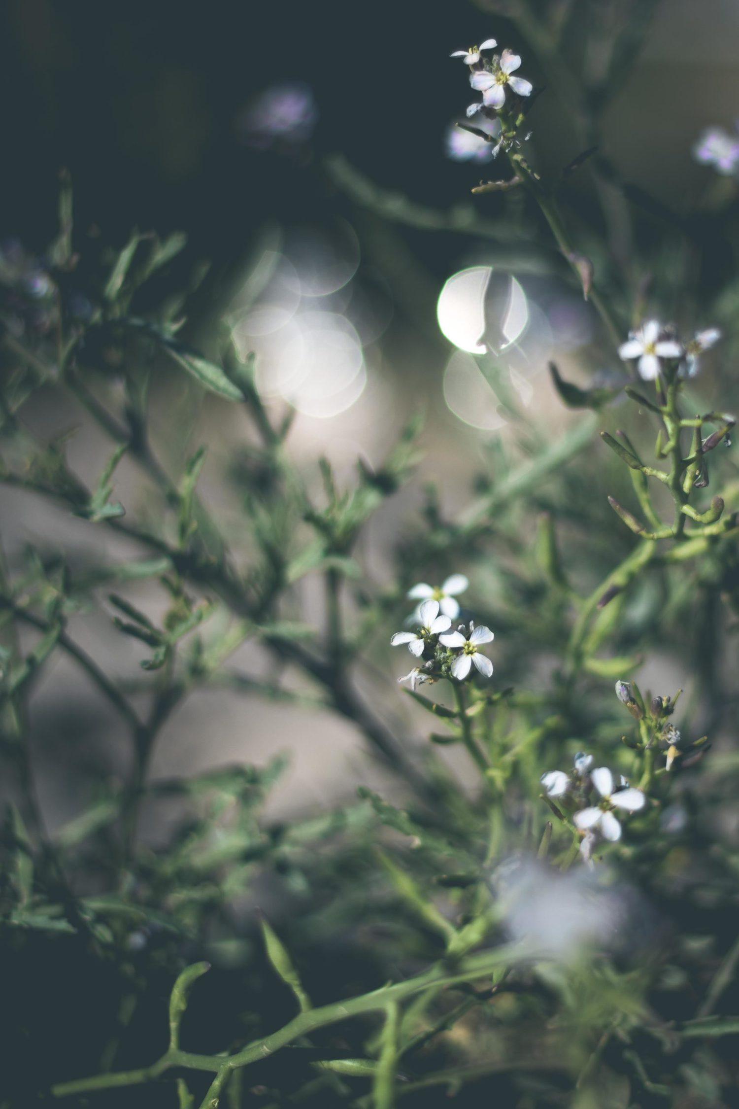 flores con bokeh