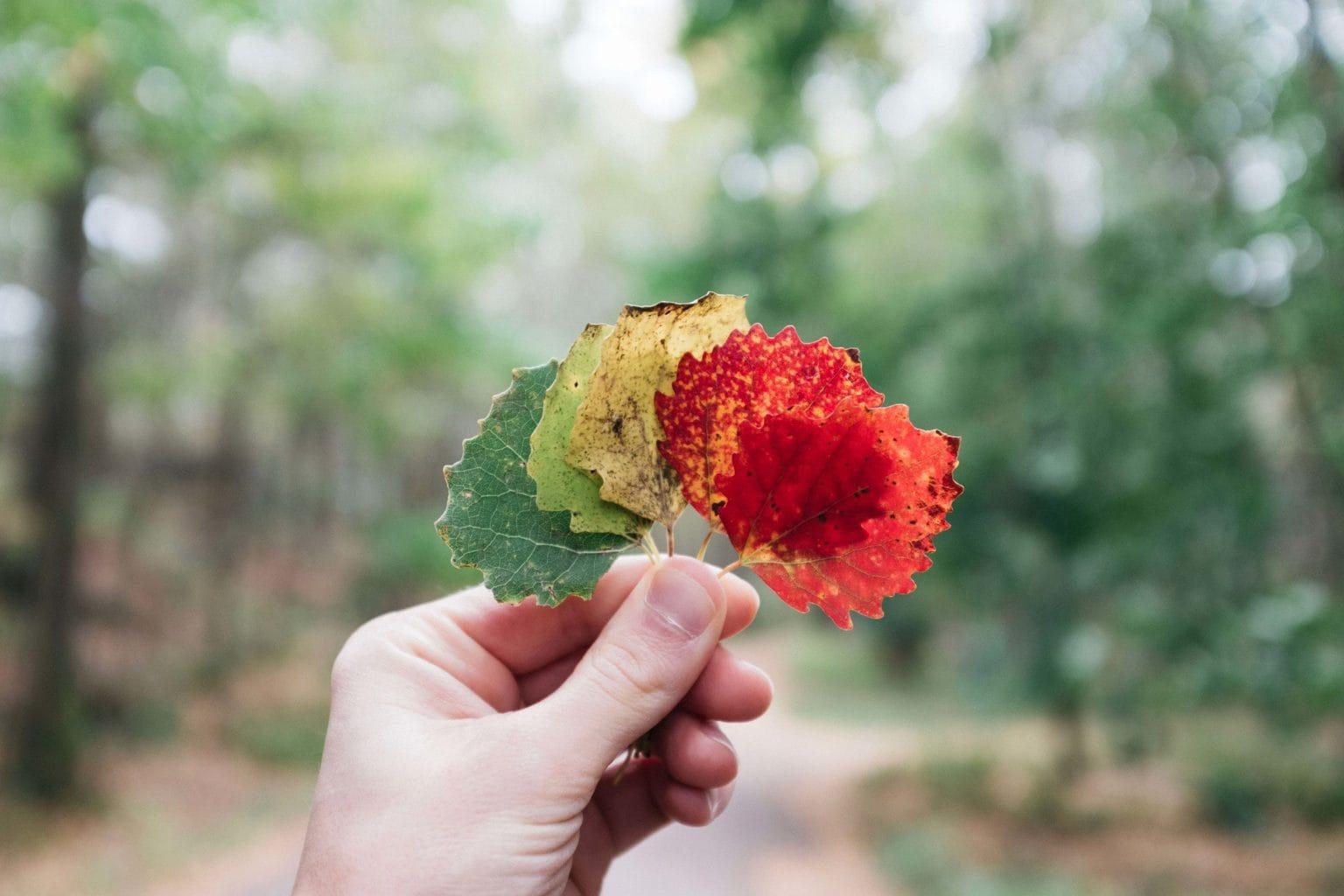 hojas secas en la mano