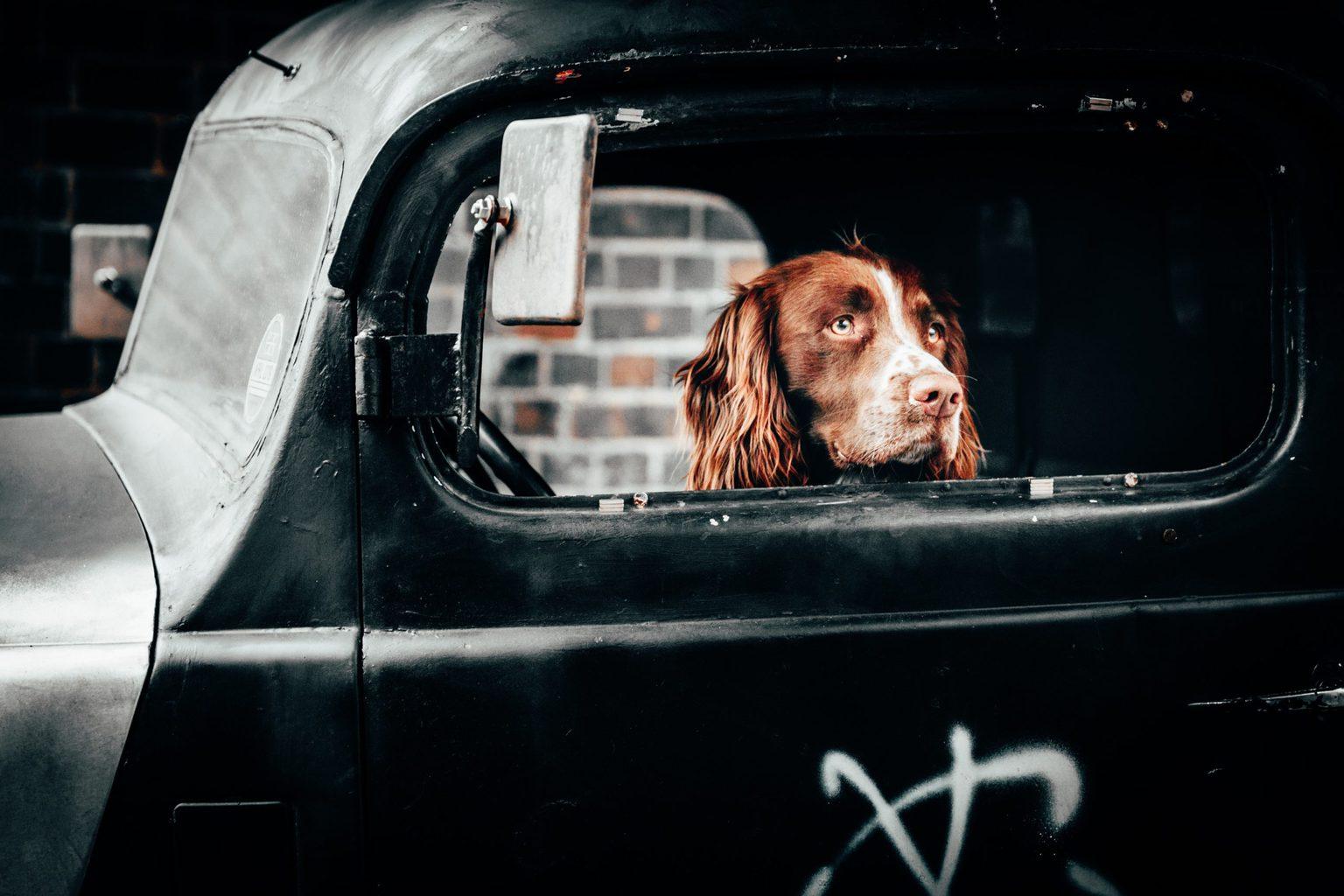 Perro asomado a la ventanilla de un coche
